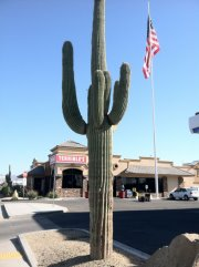 Parker, AZ